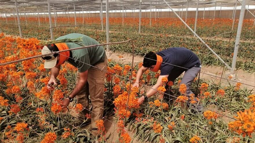 Arava farmers donate flowers to Holocaust survivors in Israel for Yom Hashoah